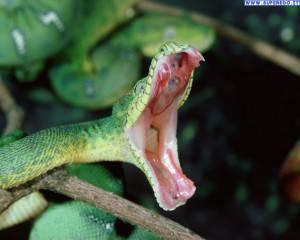 serpenti_7
