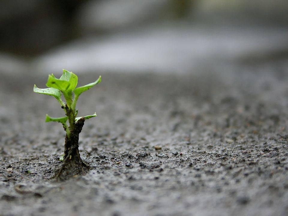 I Cristiani sono chiamati a sperare contro ogni speranza.