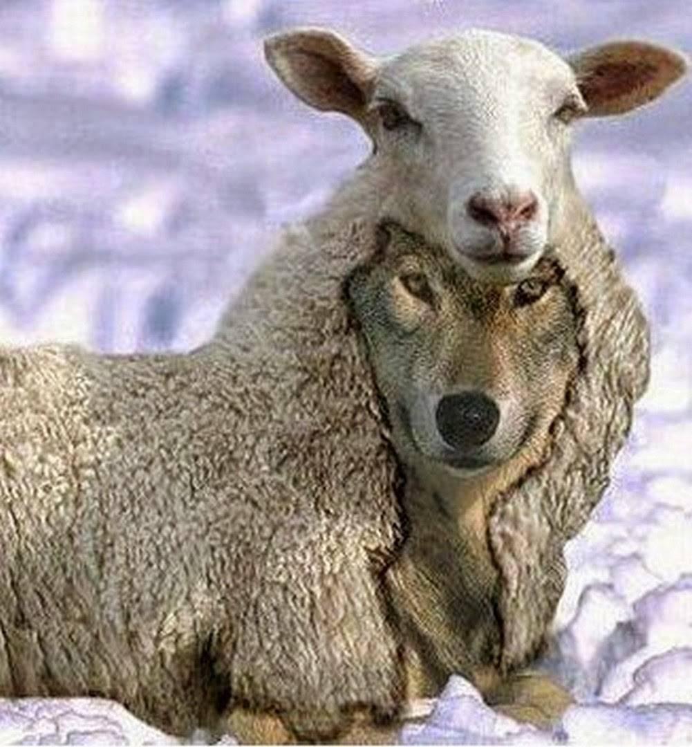 """Gesù: """"Vi mando come pecore in mezzo ai lupi""""."""