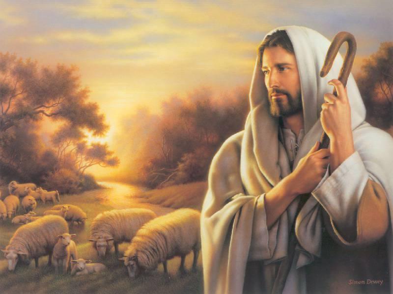 Pecore allo sbando senza pastore.