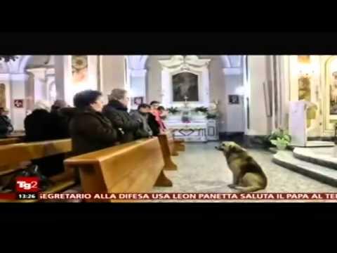 Questo cane va ogni giorno a Messa sapete il perchè? Video eccezionale..