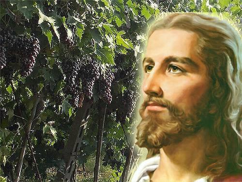 vigneto e Gesù ieratico bagliore