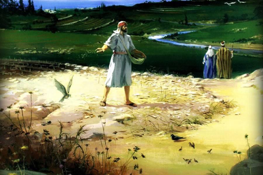 La parola del giorno dal vangelo secondo matteo 13 1 23 for Piani di luce del giorno