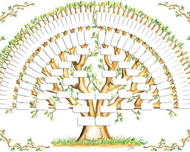 Il nostro albero genealogico ci trasmette qualcosa