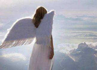 papa francesco angeli