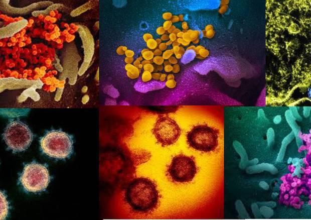 coronavirus storia