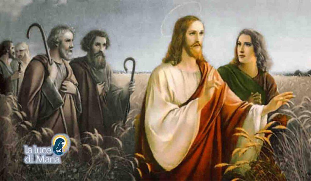 Vangelo Gesu Apostoli campi di grano