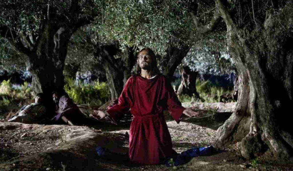 Orto degli ulivi Getsemani Gesù