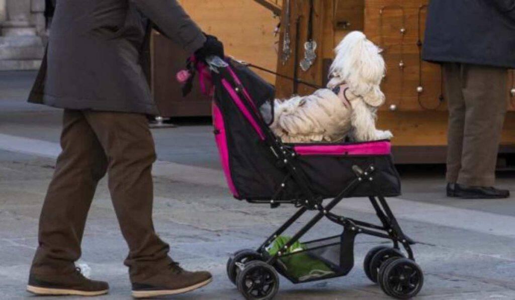 L'Italia vive un vero dramma demografico nascite