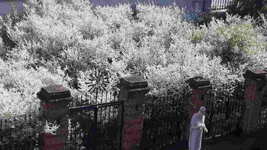 fioritura giardino madonna dei fiori