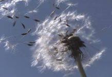 soffio del vento