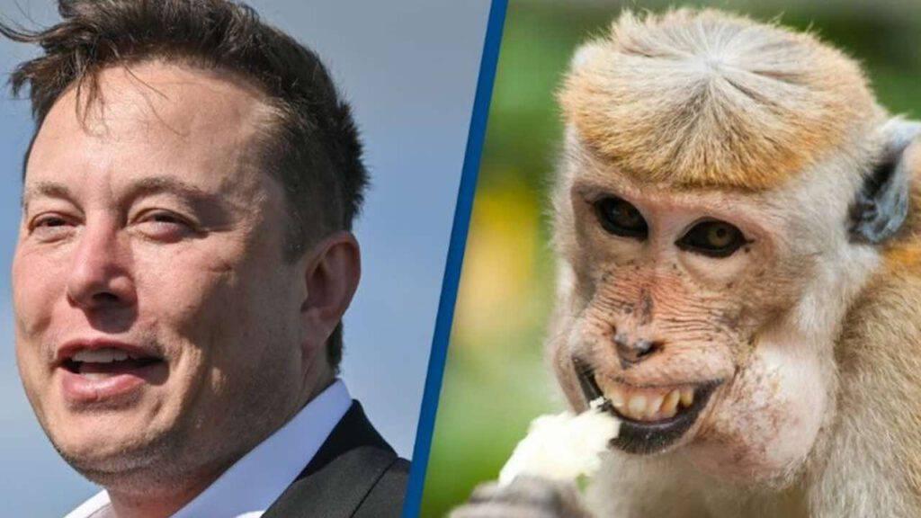 Elon Musk con scimmia
