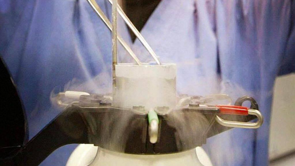 embrioni congelati